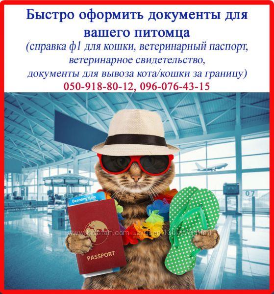 Срочно сопроводительные документы для кошки справка ф1 и т. д.