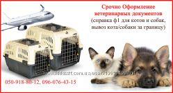 Срочно Оформление ветеринарных документов от 1 дня для котов, собак