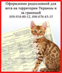 Оформление родословной для кота на территории Украины и за границей