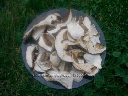 гриби білі сухі з Карпат 2018