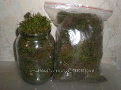 Лесной мох для улиток