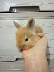 Мини Кролики декоративные  карликовые
