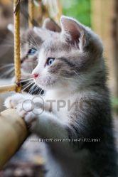 Настенный обогреватель котята